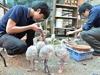 鳥類繁殖サークル